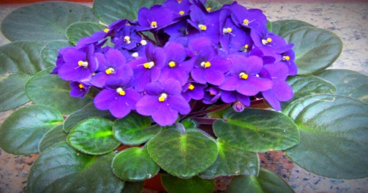 Aceste plante aduc fericire si bunastare in casa ta