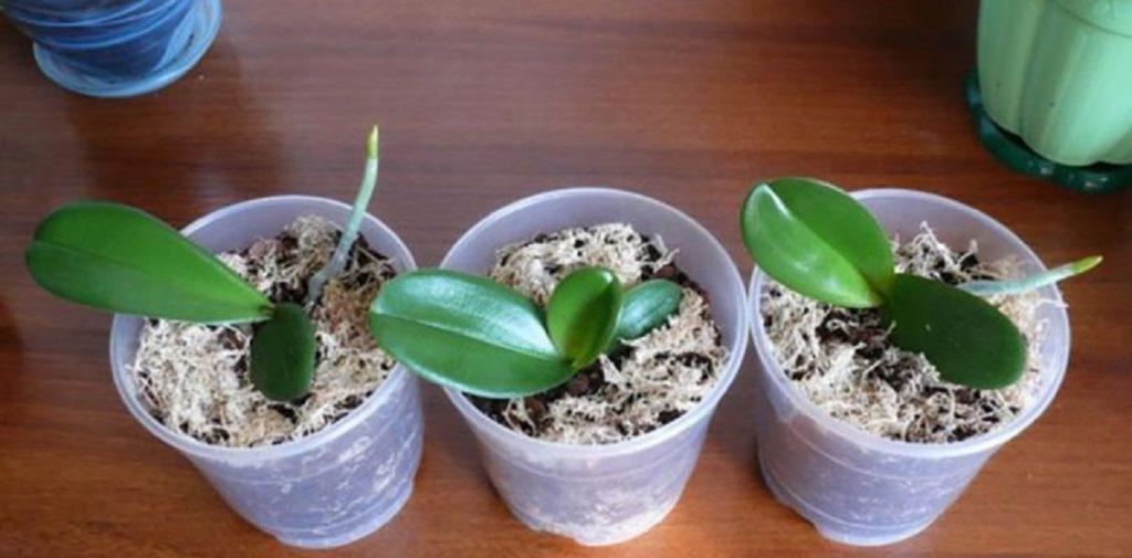 Aveți o singură orhidee, dar vreți ca ele să vă umple casa? Iată ce trebuie să faceți